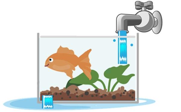 無理やり過しやすい環境にするために水をつぎ足し続ける水槽に住む金魚