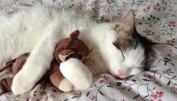 夏暑く冬寒い家にならず快適なので気持ちよく眠る猫