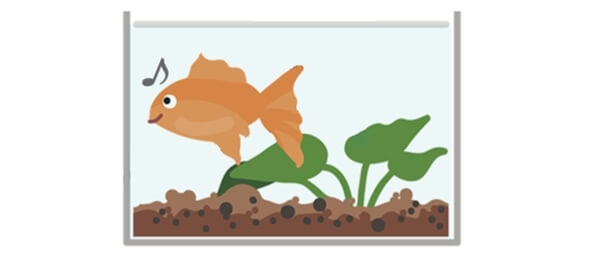 穴の開いていない快適な環境の水槽に住んでいる金魚